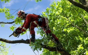 find trusted rated Down tree surgeons