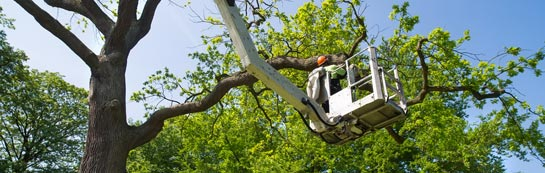 Down tree surgery services